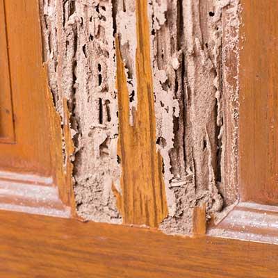 termite-damage-img